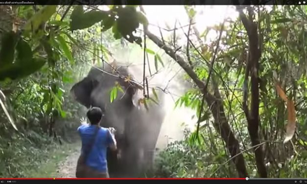 Watch What Happens When a Tourist Tries to Follow an Elephant in the Forest!