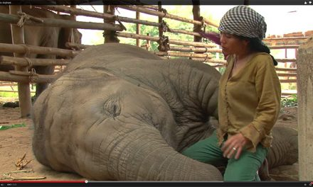Lady Sings Elephant to Sleep with Lullaby