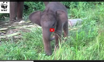 Baby Elephant Learns to Use His Trunk for the First Time