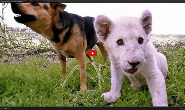 This Lion and Dog are Best Friends!