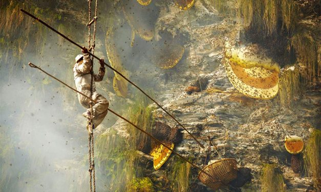 Remarkable Photos Show Nepal's Ancient Tradition of Collecting Himalayan Honey
