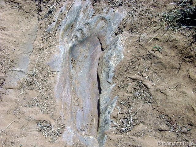 footprint-19